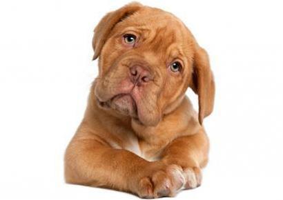 daycare-image-dog