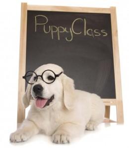 Doggie Central Puppy Training